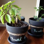 Wellness Inspired Gift Idea: Chalkboard Potted Plants & Herbs